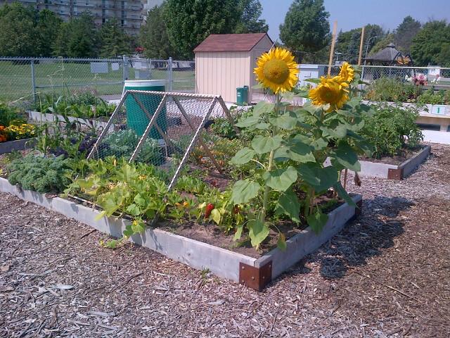 Amherst Community Garden